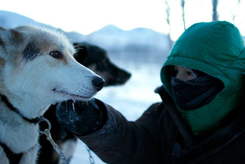 Abisko Dog Sledding 49