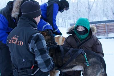 Abisko Dog Sledding 16