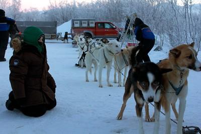 Abisko Dog Sledding 20