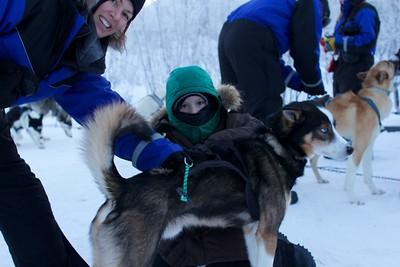 Abisko Dog Sledding 19