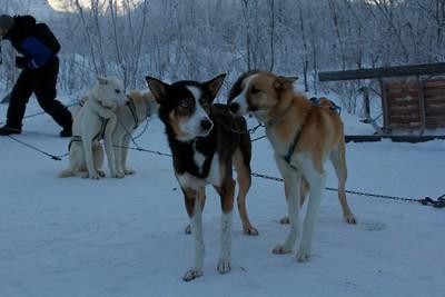 Abisko Dog Sledding 25