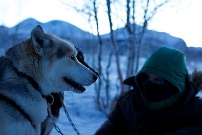 Abisko Dog Sledding 47