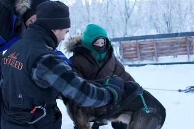 Abisko Dog Sledding 14