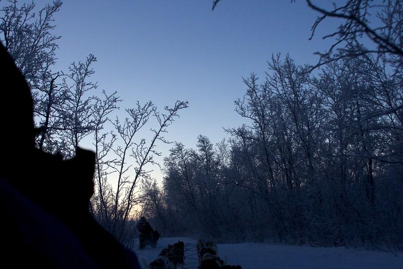Abisko Dog Sledding 31