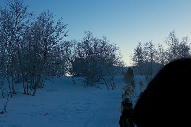 Abisko Dog Sledding 34
