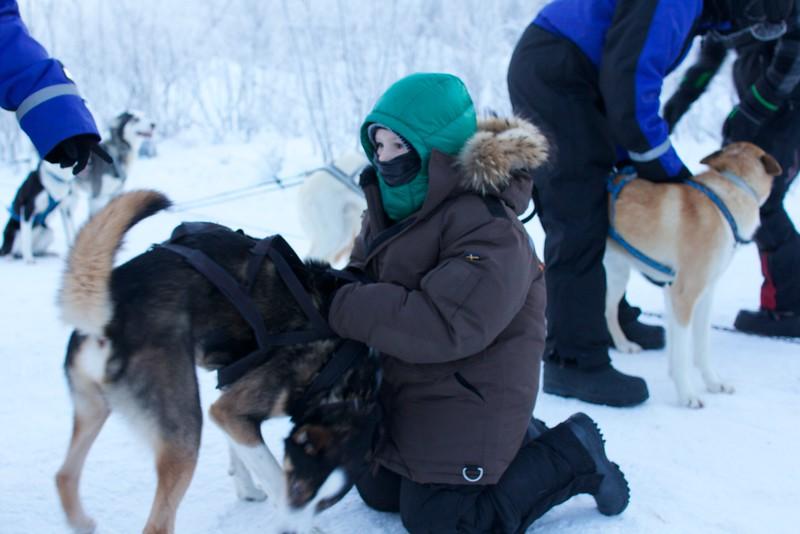 Abisko Dog Sledding 17