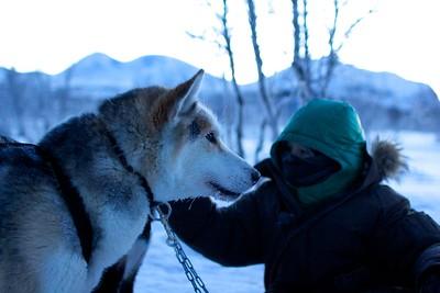 Abisko Dog Sledding 52