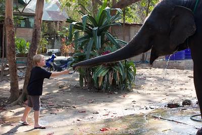 Thailand HuaHin Elephant 37