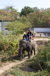 Thailand HuaHin Elephant 8