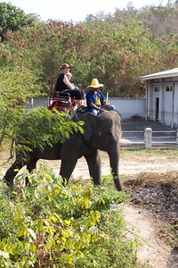 Thailand HuaHin Elephant 7