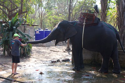 Thailand HuaHin Elephant 28