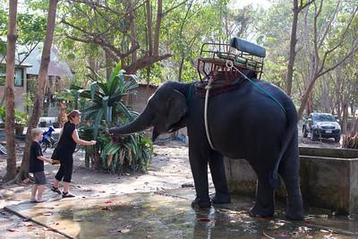Thailand HuaHin Elephant 31