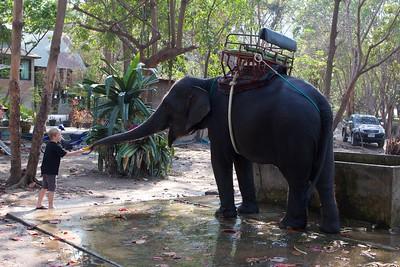 Thailand HuaHin Elephant 35