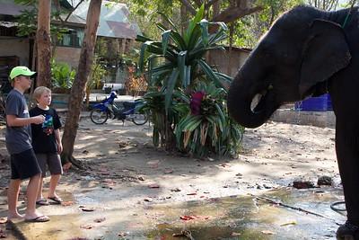 Thailand HuaHin Elephant 39