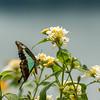 Buterfly in Ndali Lodge's garden