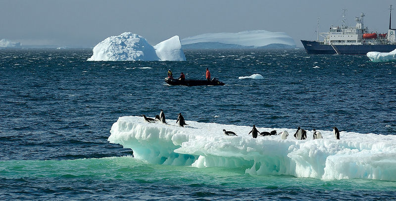 Adelie Penguins rafting out to visit the humans