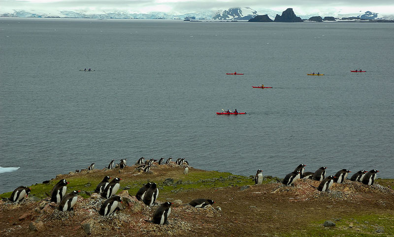 Aitcho Island circumnavigation by the kayakers; Gentoo Penguins look on but are unimpressed by the effort, choosing to remain at home on their rock piles rather then flock to the shoreline in adulation.