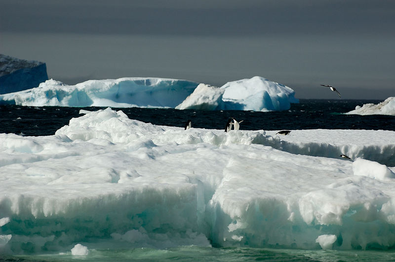 More Adelie Penguins and another iceberg