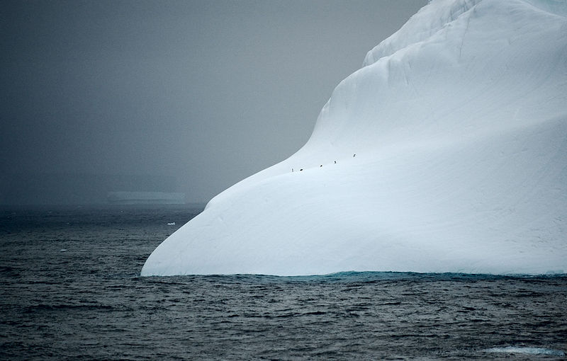 Small penguins or a big Iceberg?