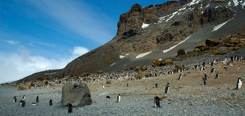 The Adelie Penguins are also at Brown Bluff.