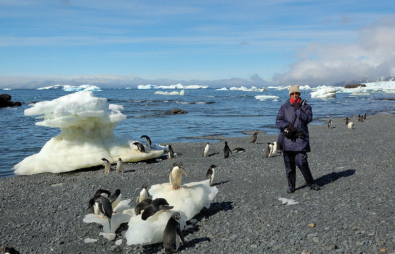 Adelie Penguins (and Kay) at Brown Bluff