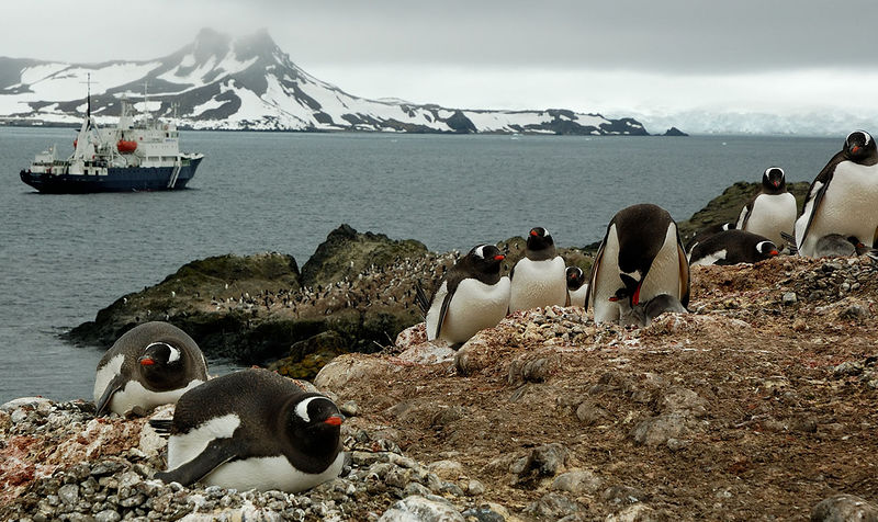 Gentoo Penguins on Aitcho Island whilst enthralled at the arrival of humans in their nice boat and having considered the poo covered rocks for some time now contemplate weightier things such as when is the next feed.