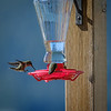 At Knight Inlet - Humming Bird feeder at the lodge