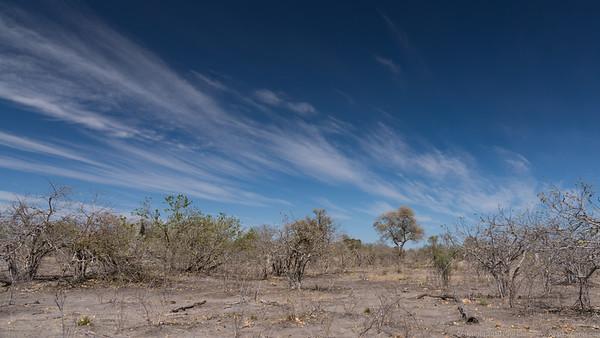 Landscape 2 - Duma Tau - Botswana 2019