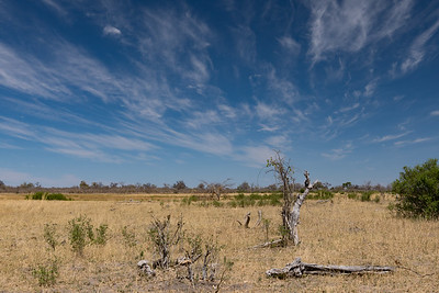 Duma Tau 1 - Botswana 2019