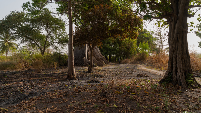 Near the Lamin Rice Fields - The Gambia 2020
