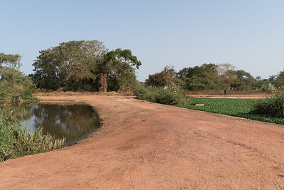 The Sewage Ponds  - The Gambia 2020