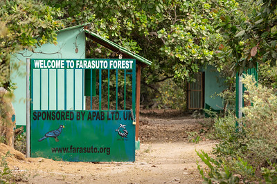 Welcome to Farasuto Forest  - The Gambia 2020