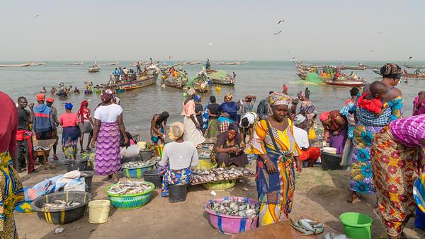 Fish Landing  at  Tanji - The Gambia 2020