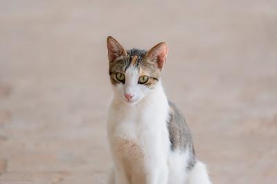 Kotu Cat via Sony 200-600mm  - The Gambia 2020