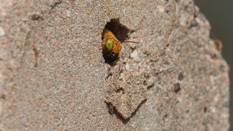 Bug Peeking through fencepost hole 2 - The Gambia 2020