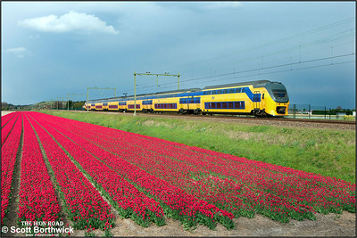 Nederlandse Spoorwegen (NS)  DD-VIRM-2 electric multiple unit, 8721 passes the tulip fields at Vogelenzand whilst forming IC2252 1620 Dordrecht-Amsterdam Centraal on 29/04/2015.