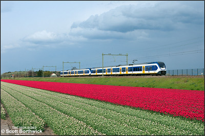 A pair of Nederlandse Spoorwegen (NS) SLT 'Sprinter Lighttrains', 2456+2422 pass the tulip fields at Vogelenzand whilst forming RE6350 1656 Den Haag Centraal-Haarlem on 29/04/2015.