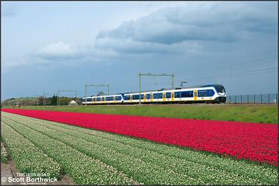 A pair of Nederlandse Spoorwegen (NS) SLT 'Sprinter Lighttrains', 2456+2422 pass the tulip fields at Vogelenzand whilst forming RE6350 1656 Den Haag Centraal-Haarlem on 29/04/2015.