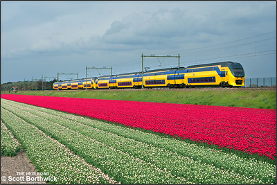 Nederlandse Spoorwegen (NS)  DD-VIRM-4 electric multiple units, 9558+9569 pass the tulip fields at Vogelenzand whilst forming IC2269 1712 Amsterdam Centraal-Dordrecht on 29/04/2015.