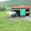 Bus stop, Altai Republic, Russia.