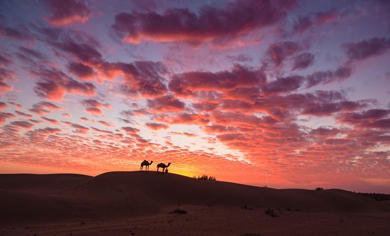 Desert camel safari, paid extra for epic sunset! Thar desert, India