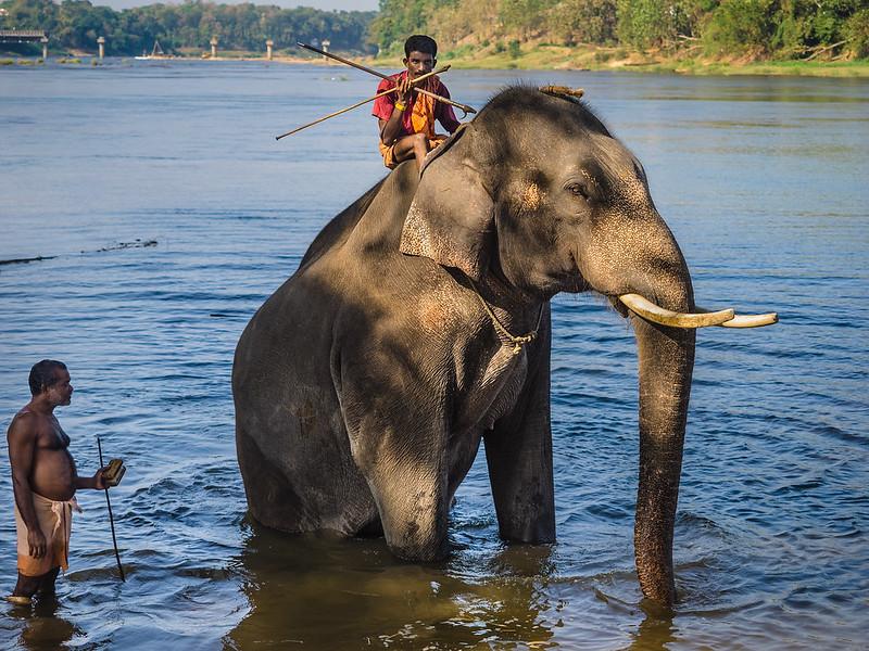 Elephant bathing in Kodanad, India