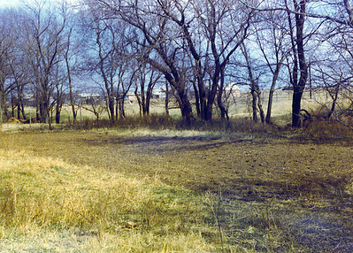 View of Garden on Land 1975