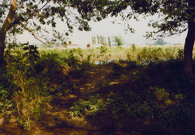 View of Elm Creek & Pond with Horse in background on Land 1975