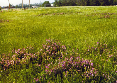 View of flowers & baseball field on Land 1975