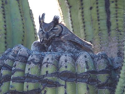 Owls 2017