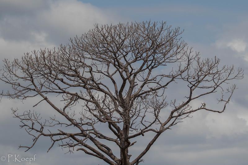 Osprey<br /> Location:  Sarasota county, FL