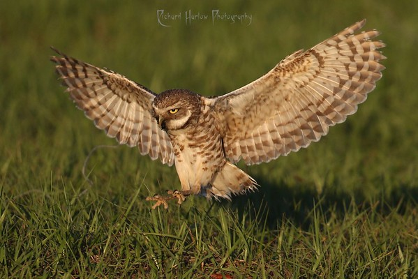 Owls and Sandhill