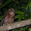 Majimbini Forest Reserve, Mayotte