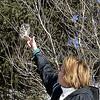 Kim and Boreal Owl (Aegolius funereus) Duluth MN
